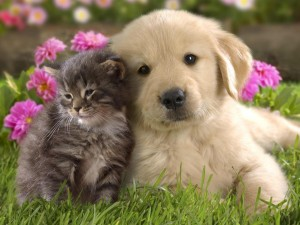 Puppies-vs-kittens