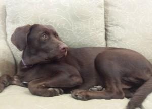 puppysofa