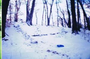 Snow_Landscape