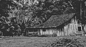 Henry_David_Thoreau_Walden