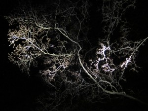 In dark trees by Alberto Garcia on flickr