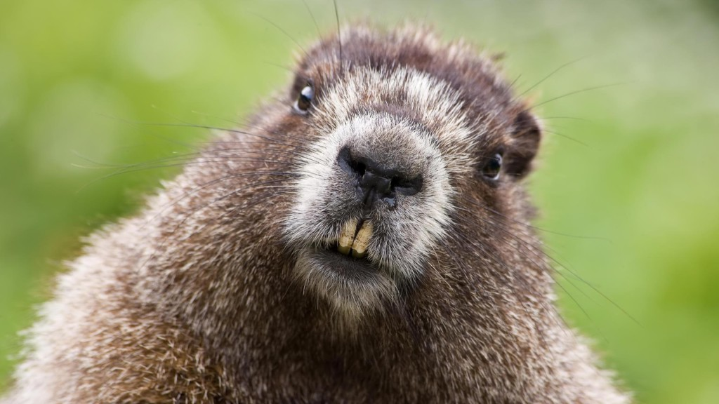 Groundhog! (from wallpapercave.com)