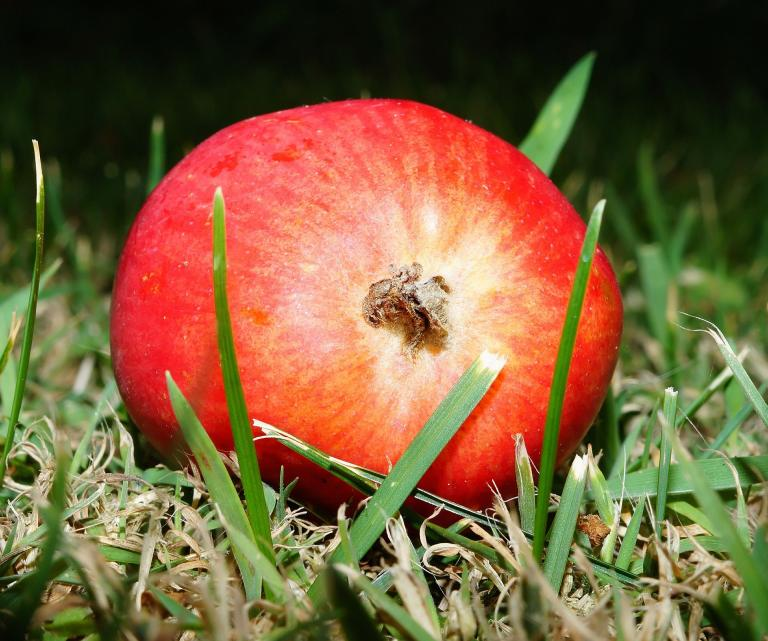 apple-402453_1920