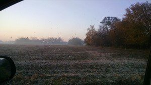 photo frost field