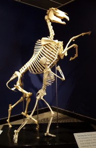 Horse and Human, from the International Museum of the Horse