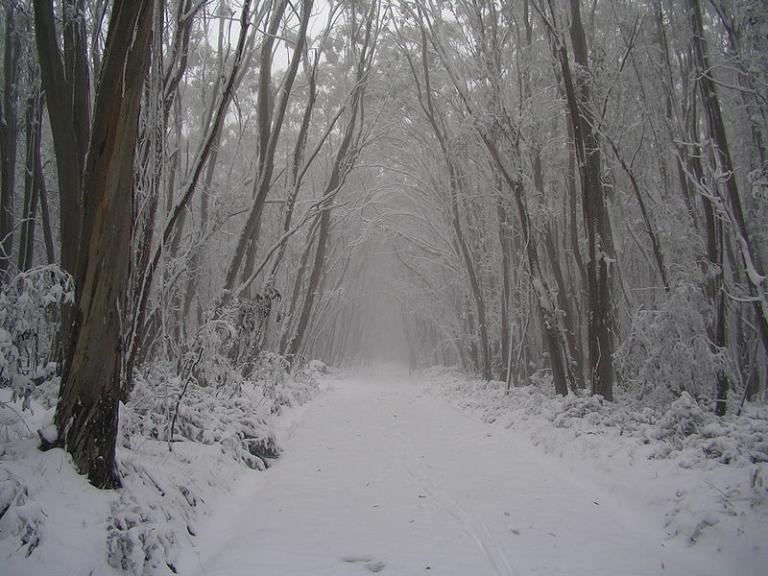 wide, snowy trail