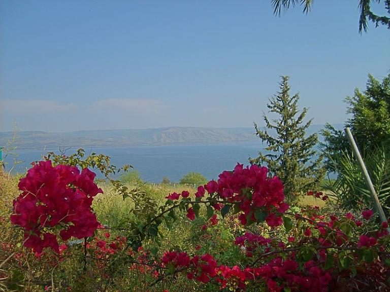 Flowers on the Mount of Beatitudes