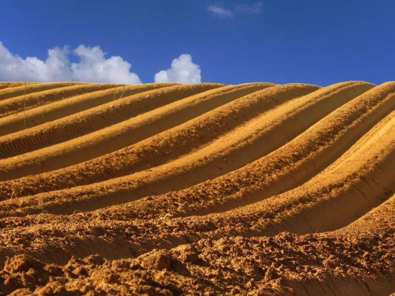 A field in Israel that's been plowed