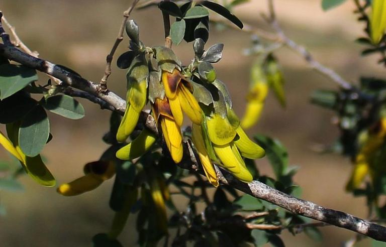 Detail of Israeli nature