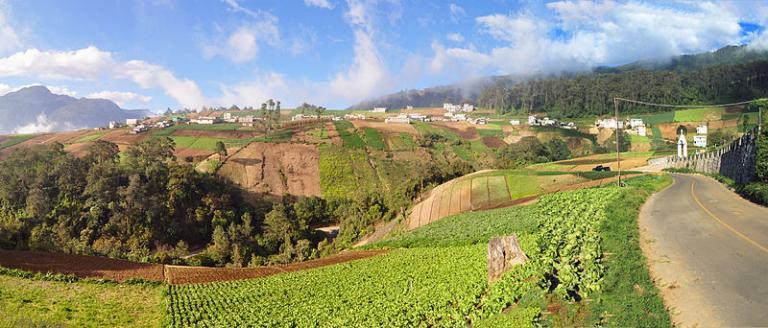 Guatemala farms in the highland area