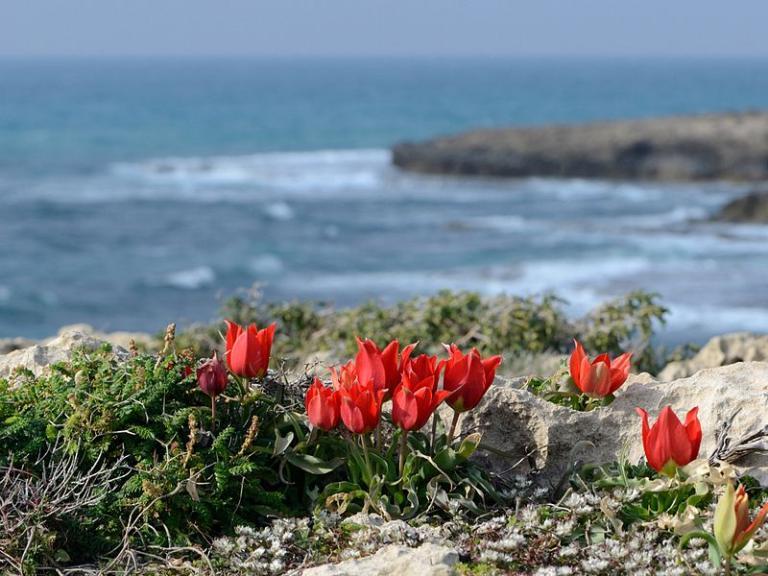 On the beach near Tel Dor