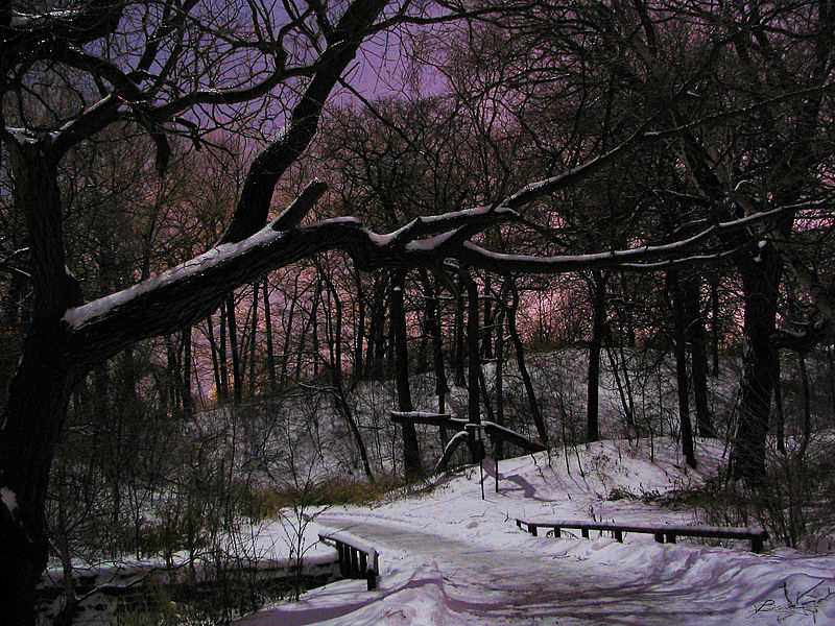 A winter evening in Toronto's High Park