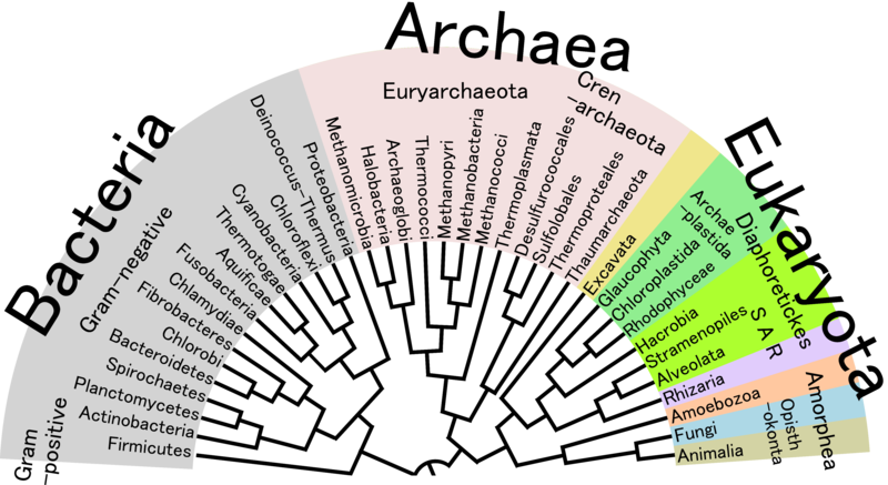A representation of the phylogenetic tree of life