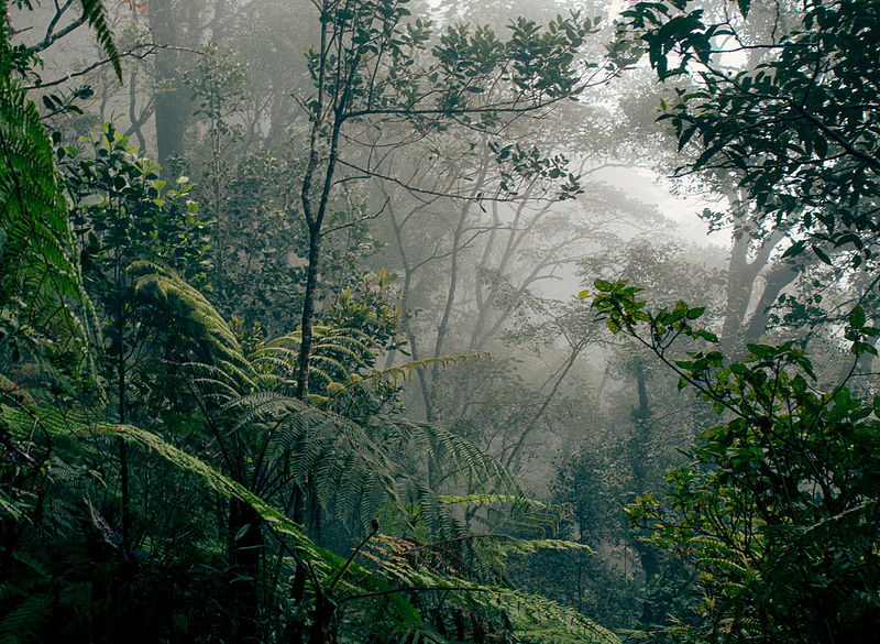 Borneo, in a foggy rainforest but still alive and intact