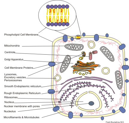 Cellular structure, illustrated