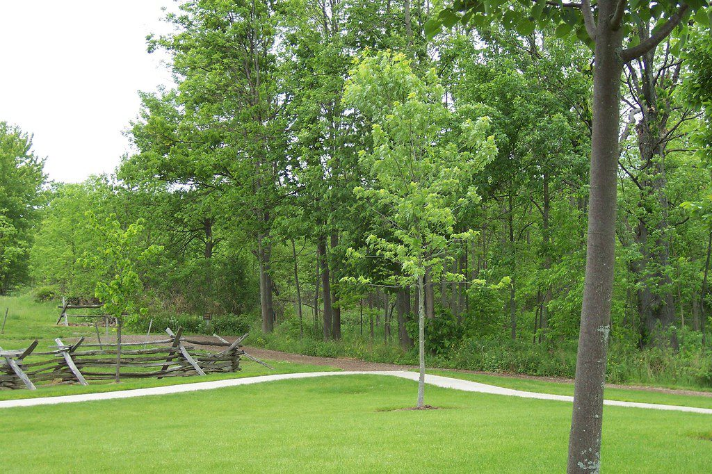 Is this the real Sacred Grove?