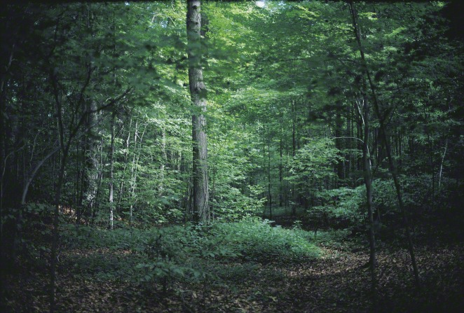 Trees in the Sacred Grove