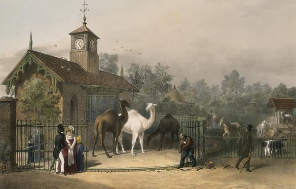 ZSL London Zoo 1835