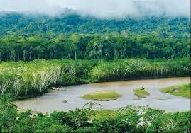 Peru's rainforest