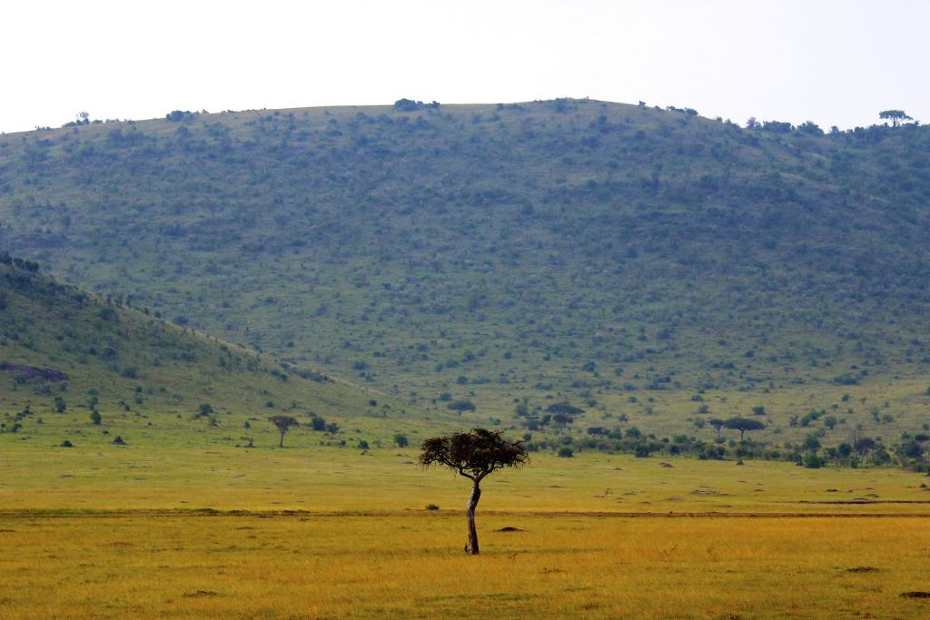 Kenya, savanna