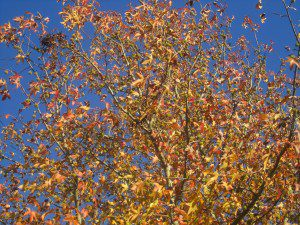Using this pretty fall photo taken in my front yard instead of any photo of Duggars kissing anyone else. Better for my stomach this way.
