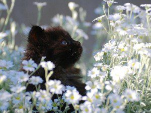 Since this is a Debi Pearl posting instead of hidden flowers here's a kitten hidden in flowers. Trust me, you'll need a kitten after reading this