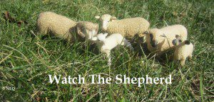 watchthehepherd