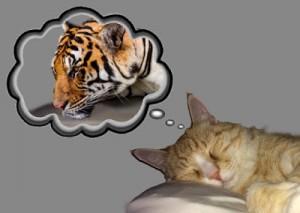 Kitten Dreams II