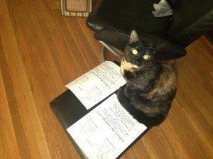 My cat loves magic!
