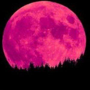 April S Pink Moon