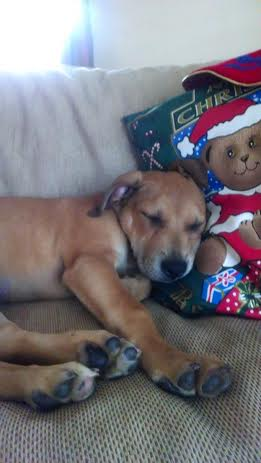 Folly-Christmas-Pillow1