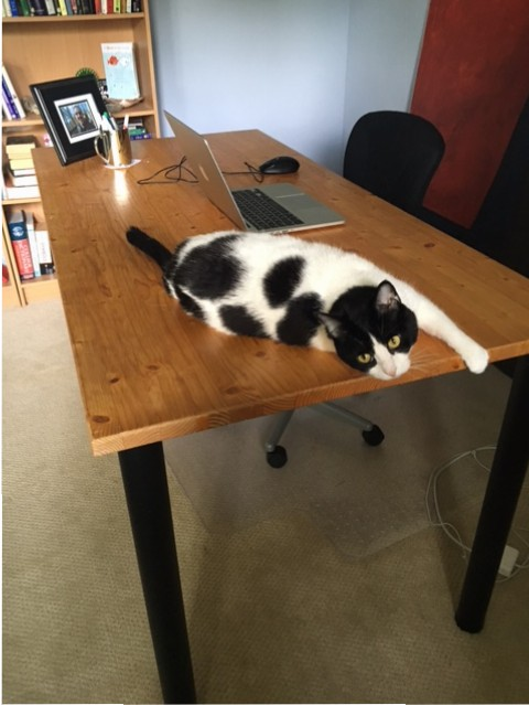 The old desk and chair that have been replaced for my new business. I kept the cat, of course.