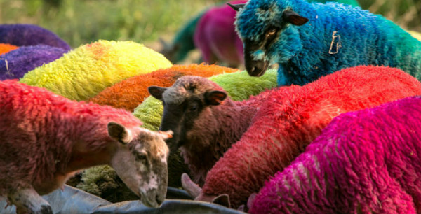 If only I came from a whole family of psychedelic sheep, the holidays would be much easier. Photo by Catherine Earp, 2014 Latitude Festival, England.