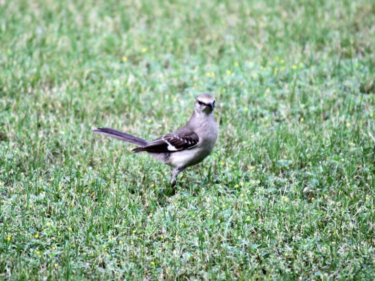 back yard bird
