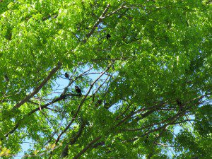birds in tree 03.24.12