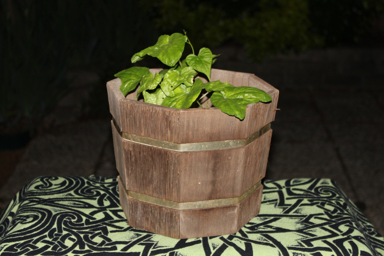 Beltane solitary 06 Ostara plant