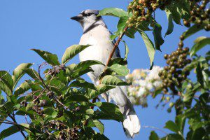 bird in tree 08.09.14a