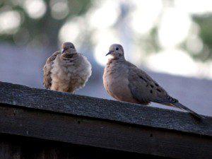 birds on wall 08.17.14