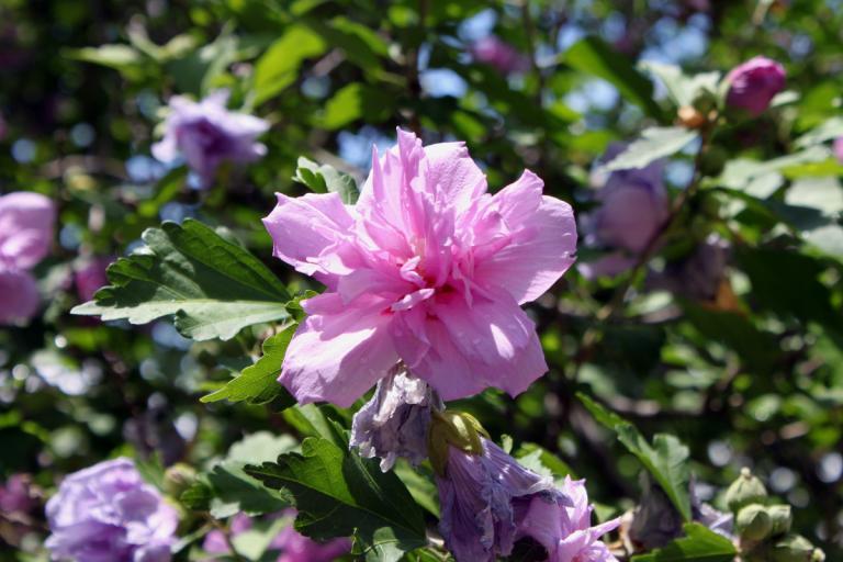 flower 06.14.15