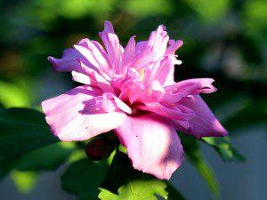 flower 08.30.15
