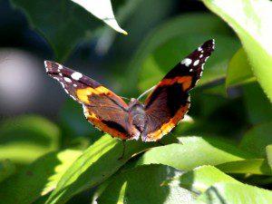 Spring 2012 30
