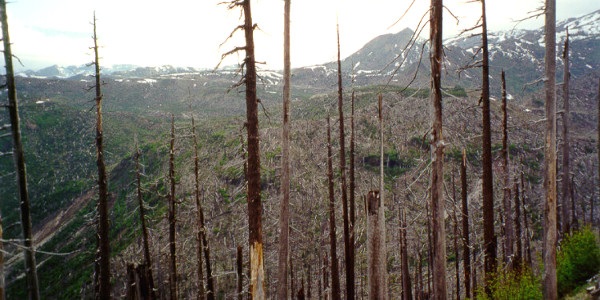 Mt. St. Helens blast zone - photo taken in 2000 of the damage caused in the 1980 explosion