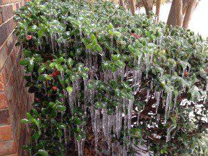 ice storm Dec2013 12