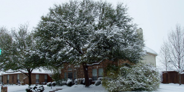 snow in Texas 2010