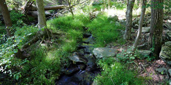 Bushkill Falls 2015 34 600x300