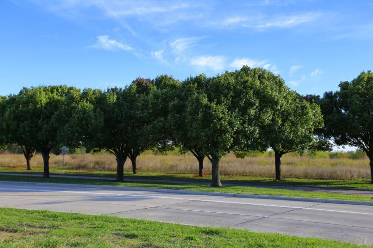 McKinney trees 11.07.15 02