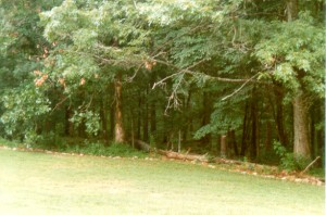 the edge of the woods, circa 1988
