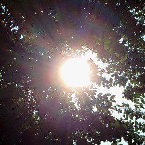 Sunrise in tree 08.02.14 edited