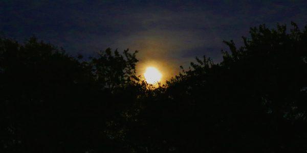moonrise 09.27.15 01 600x300