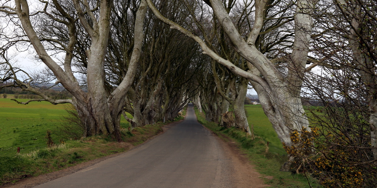 03 011 the Dark Hedges